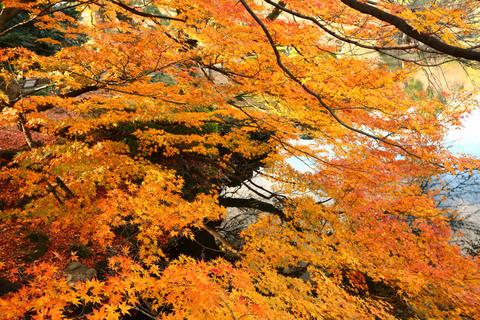 2015_momiji_09.JPG